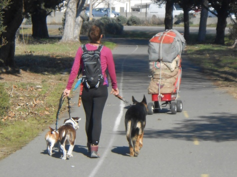 Cart in Bay Trail and dog walker