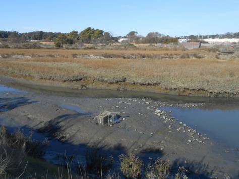 Cart in wetlands in mud Dec 11 2017
